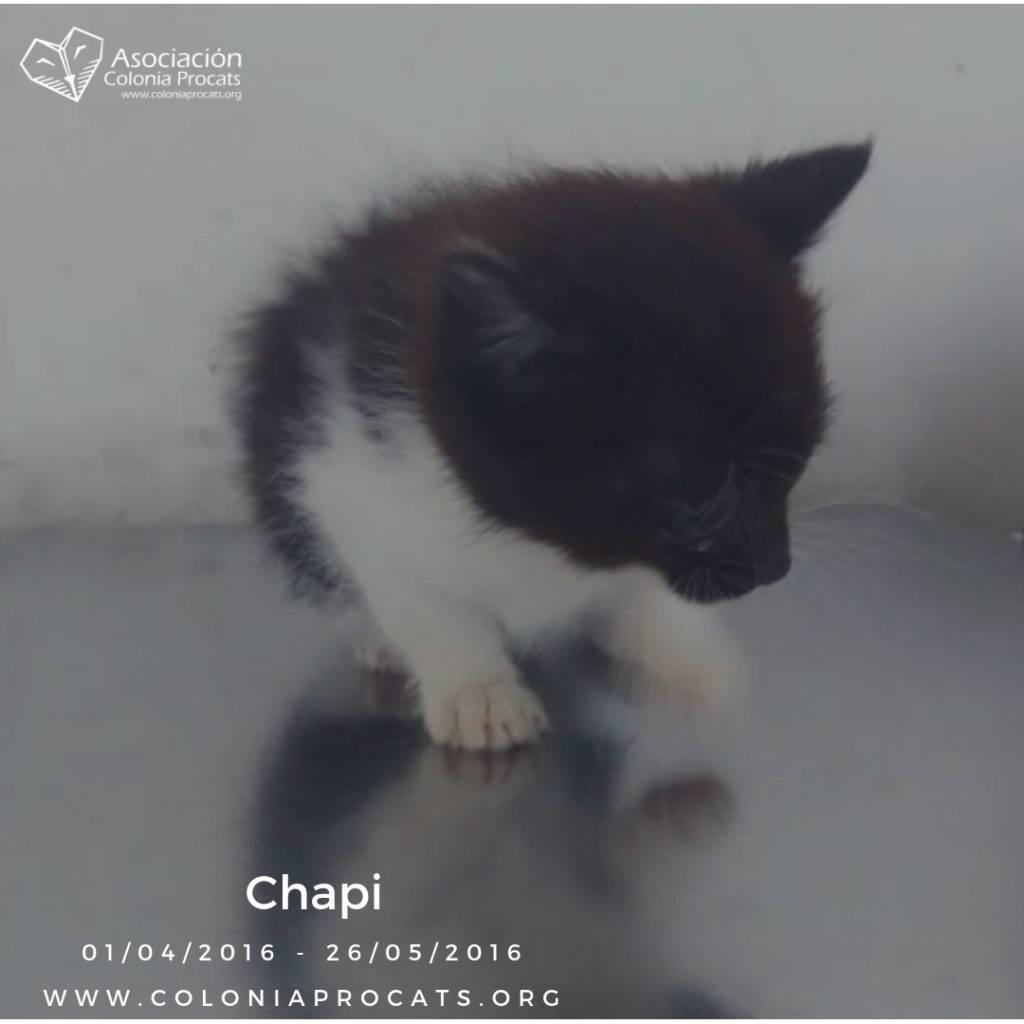CHAPI