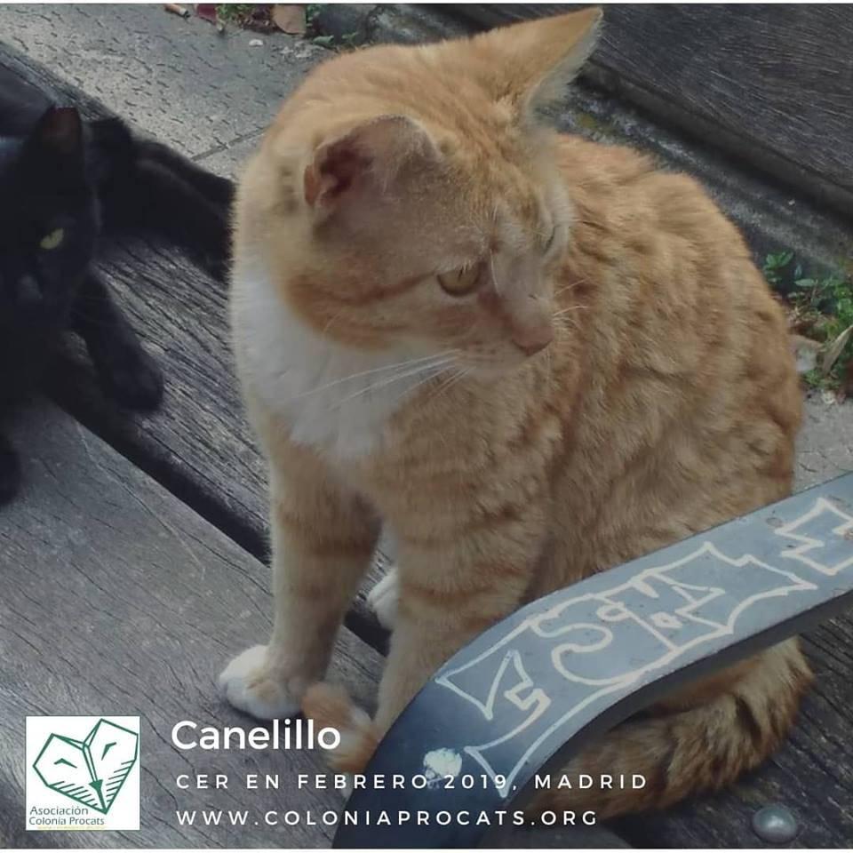CANELILLO